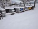 Sorties d'hiver Dscf4511