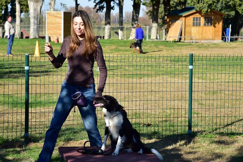 Photos de vous et vos chiens en pleine activité (course, vtt,ring, ..) Dsc_0410