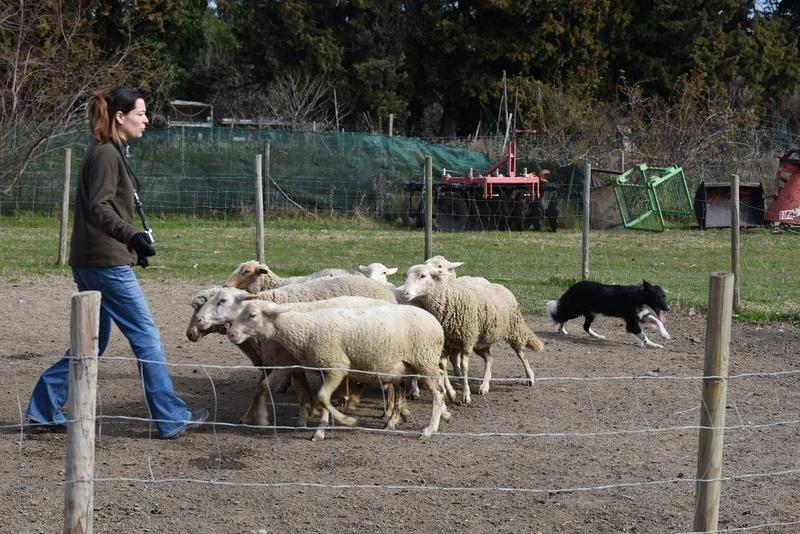 Photos de vous et vos chiens en pleine activité (course, vtt,ring, ..) Indie_10
