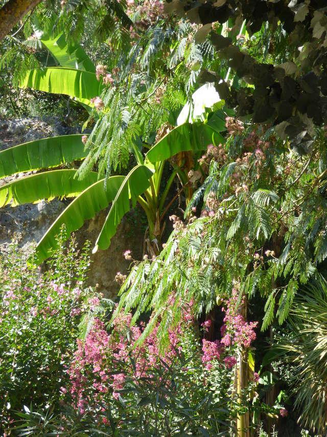 (24) Petit jardin exotique à la Roque-Gageac P1050211
