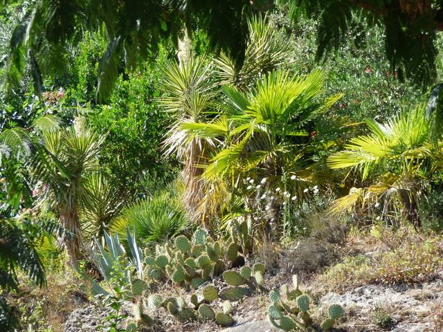 (24) Petit jardin exotique à la Roque-Gageac P1050212