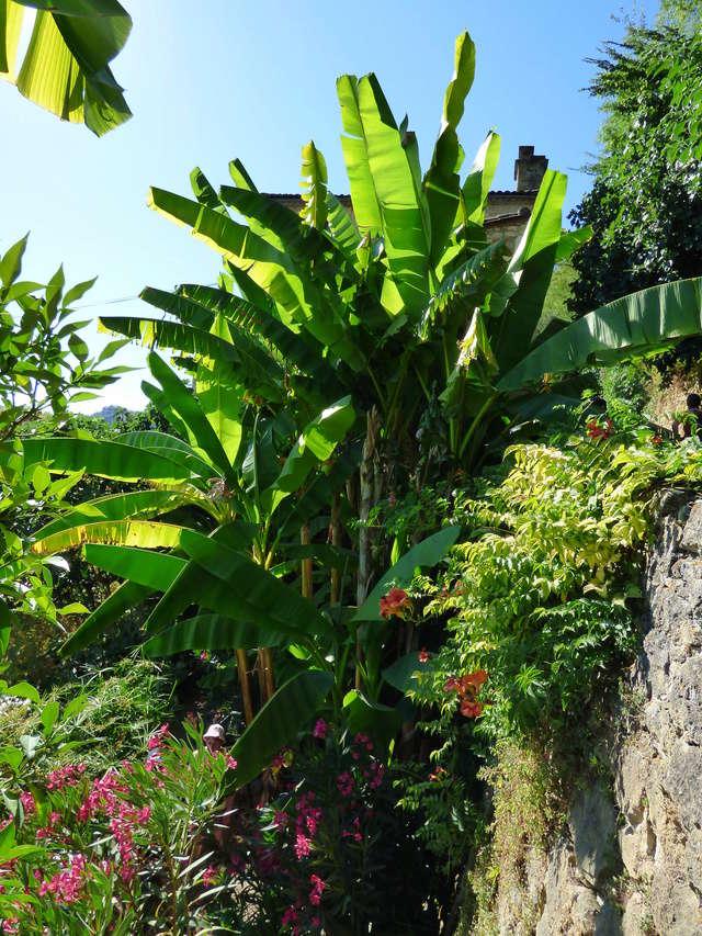 (24) Petit jardin exotique à la Roque-Gageac P1050213