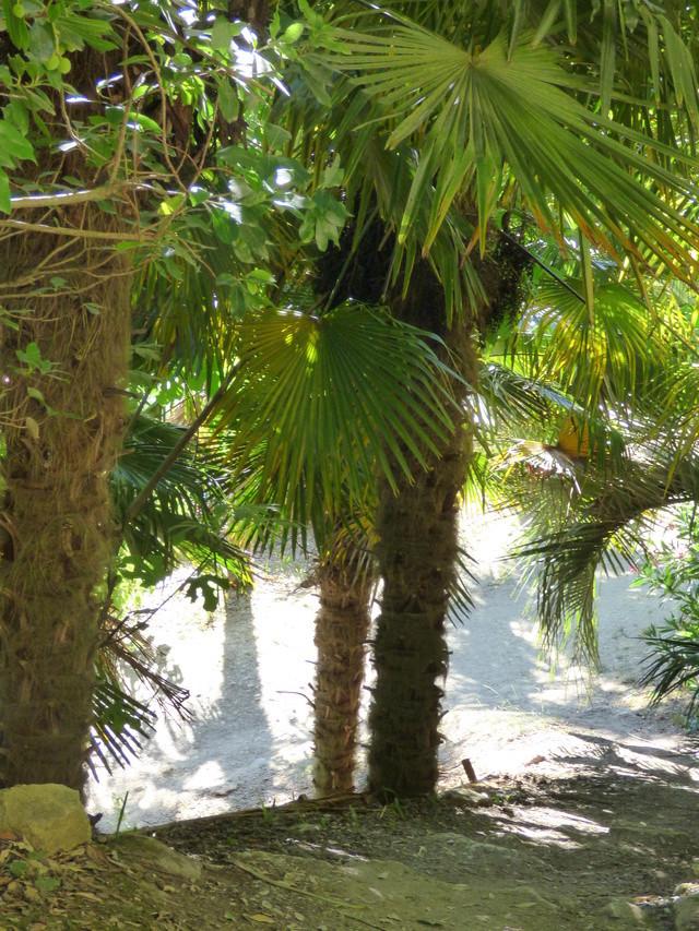 (24) Petit jardin exotique à la Roque-Gageac P1050214