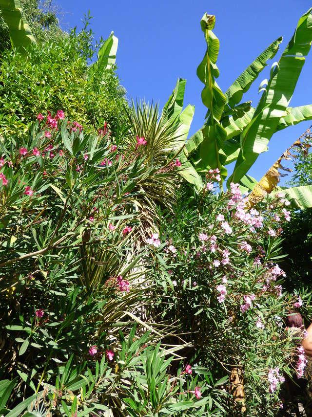 (24) Petit jardin exotique à la Roque-Gageac P1050215