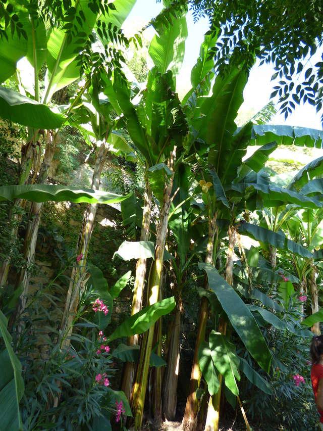 (24) Petit jardin exotique à la Roque-Gageac P1050311