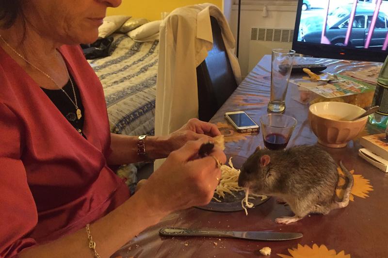 Et voici notre bébé Rat des champs : Ratatouille  Img_5112