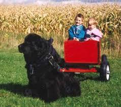 Les règles d'or d'un bon voyage avec son chien. - Page 3 Tn10