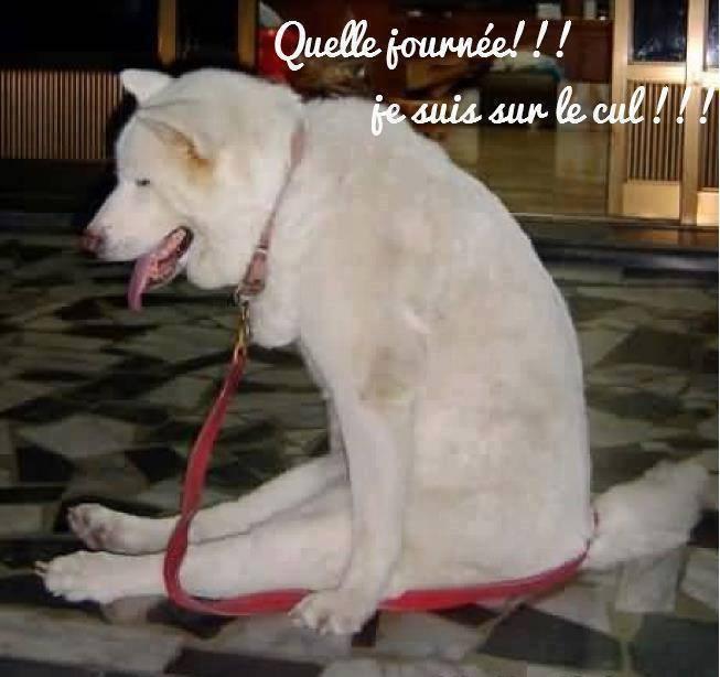 HUMOUR - Drôles de bêtes... - Page 4 13686710