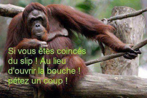 HUMOUR - Drôles de bêtes... - Page 5 13901310
