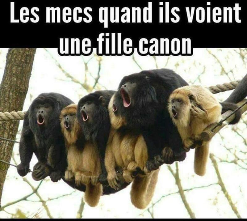HUMOUR - Drôles de bêtes... - Page 4 13912810