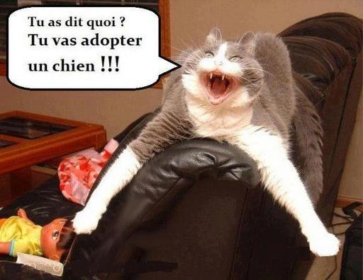 HUMOUR - Drôles de bêtes... - Page 4 32001710