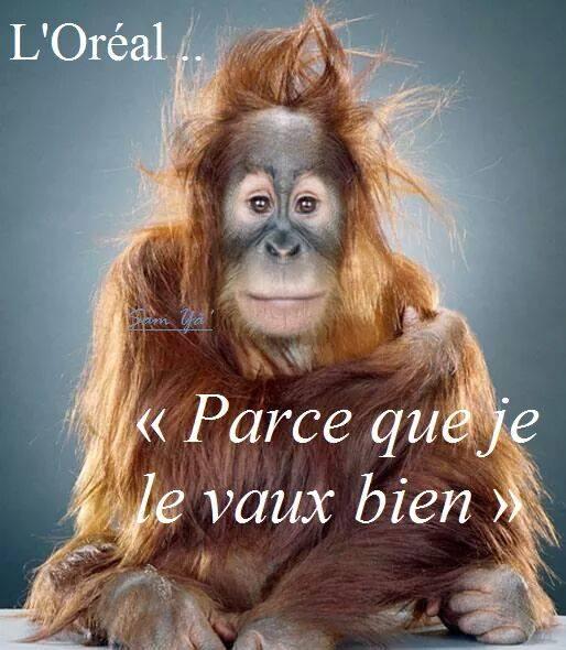 HUMOUR - Drôles de bêtes... - Page 4 53791310