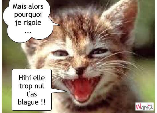 HUMOUR - Drôles de bêtes... - Page 4 Chat-711