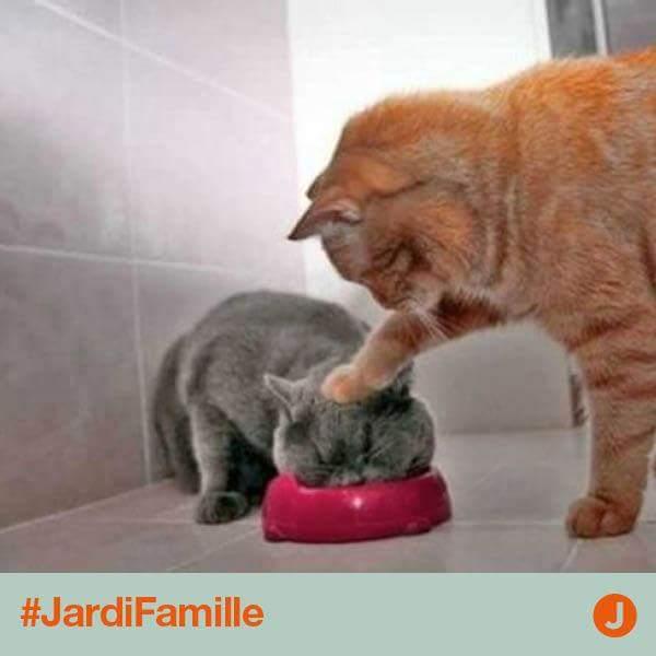 Images du jour sur les chats - Page 21 Chat10