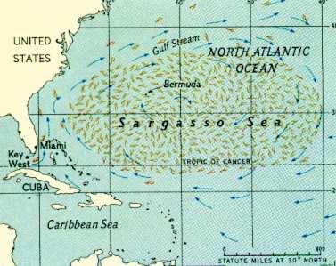 L'anguille européenne Sargas11