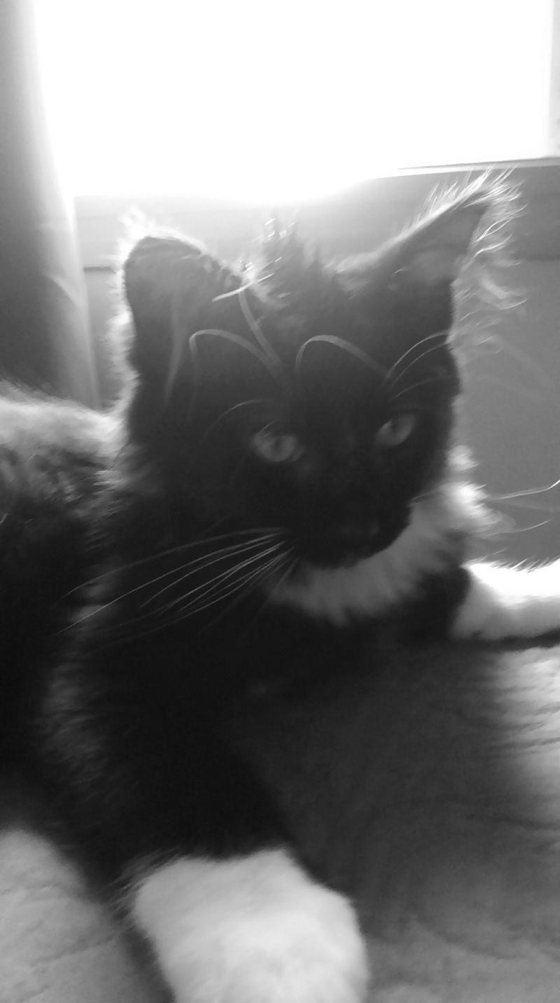 Melchior mâle noir et blanc né le 10/05/2016 Imag1110