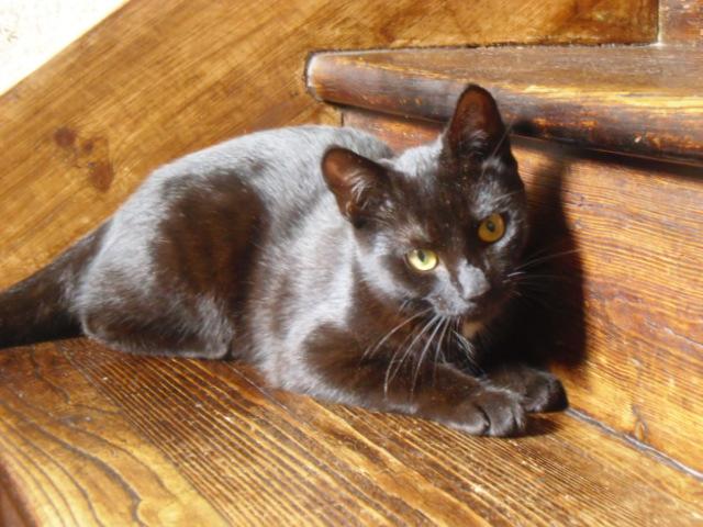 lexy - Lexy, femelle noire, née le 01/078/2015 Pict0010