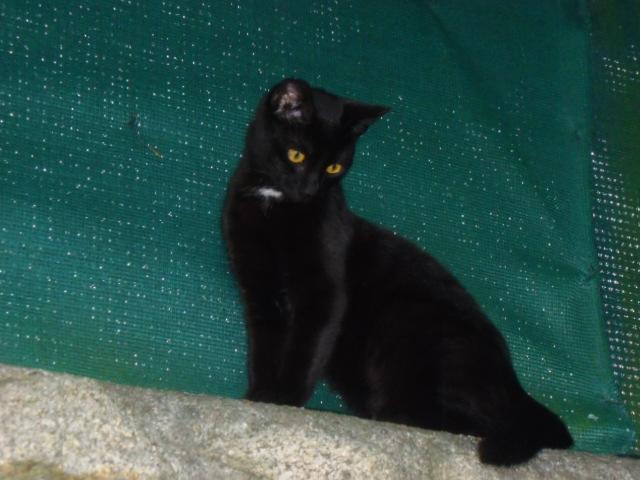 lexy - Lexy, femelle noire, née le 01/078/2015 Pict0011