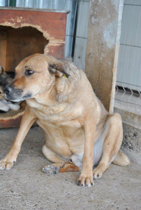 BALZAC - mâle croisé- taille moyenne né en 2008  (PASCANI) - en FA chez Yazou (Belgique) adopté par Cindy (Belgique) - Page 3 Balzac10