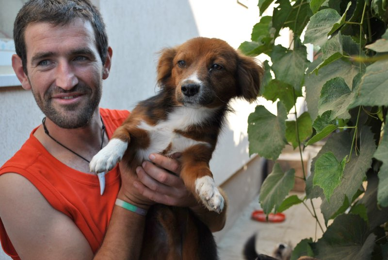CHOCOLAT - mâle adulte, jeune, taille moyenne (CHEZ FLORIN) - Adopté en Roumanie Chocol10