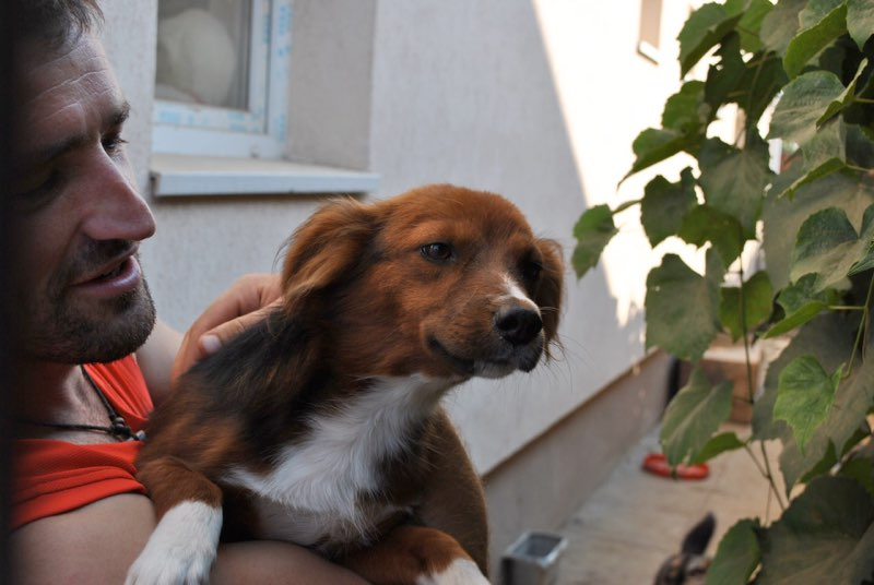 CHOCOLAT - mâle adulte, jeune, taille moyenne (CHEZ FLORIN) - Adopté en Roumanie Chocol11