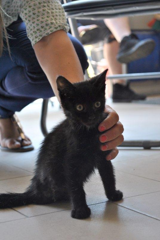 NARCISSA - chaton femelle amputée - née en juin 2016 - Chez Lucian (PASCANI) - réservée FA par Abysse_Bybysse (dpt92) Narcis10