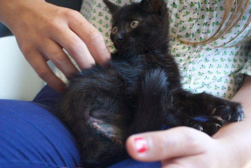 NARCISSA - chaton femelle amputée - née en juin 2016 - Chez Lucian (PASCANI) - réservée FA par Abysse_Bybysse (dpt92) Narcis11