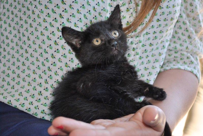 NARCISSA - chaton femelle amputée - née en juin 2016 - Chez Lucian (PASCANI) - réservée FA par Abysse_Bybysse (dpt92) Narcis12