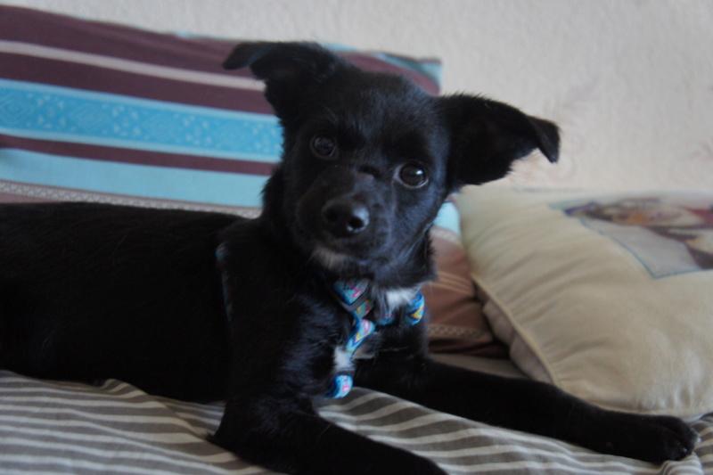 COSMO, chiot mâle, né en mars 2016 - Pascani - adopté par Priscillia (dep 31) - Page 2 Dsc03310