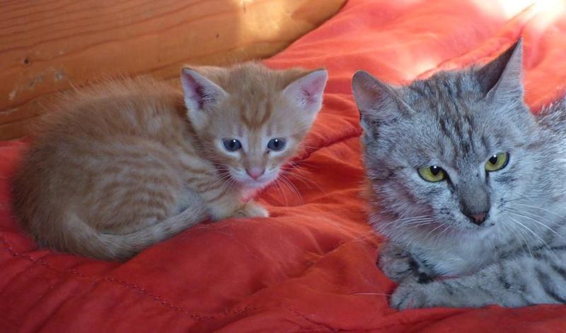SACHA - chaton mâle, né en juin 2016 - réservé FA par Magali (Belgique) - DECEDE Sacha10