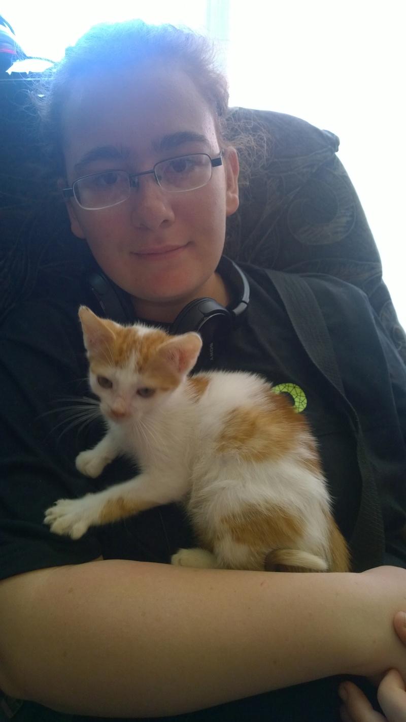 MITSY ( ex SATINE), chaton femelle née en mars 2016 - Pascani - adoptée par Abysse (dpt92) - PARTIE REJOINDRE LES ETOILES le 3 juillet 2017 .... Wp_20149