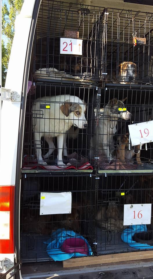 PHOTOS DU RAPATRIEMENT Roumanie  9/10 juillet 2016 13600312