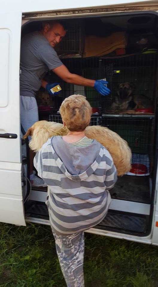 PHOTOS DU RAPATRIEMENT Roumanie  9/10 juillet 2016 13614911