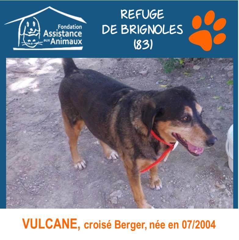 VULCANE, femelle croisé beauceron, née en 2004, dix ans de refuge! 18157710