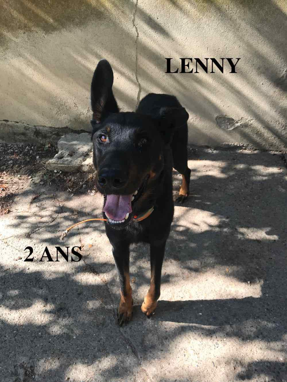 LENNY mâle beauceron né en 2015 abandonné cet été 40764610