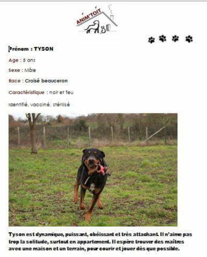 TYSON magnifique croisé beauceron/rott né en 2012 adorable Scree109