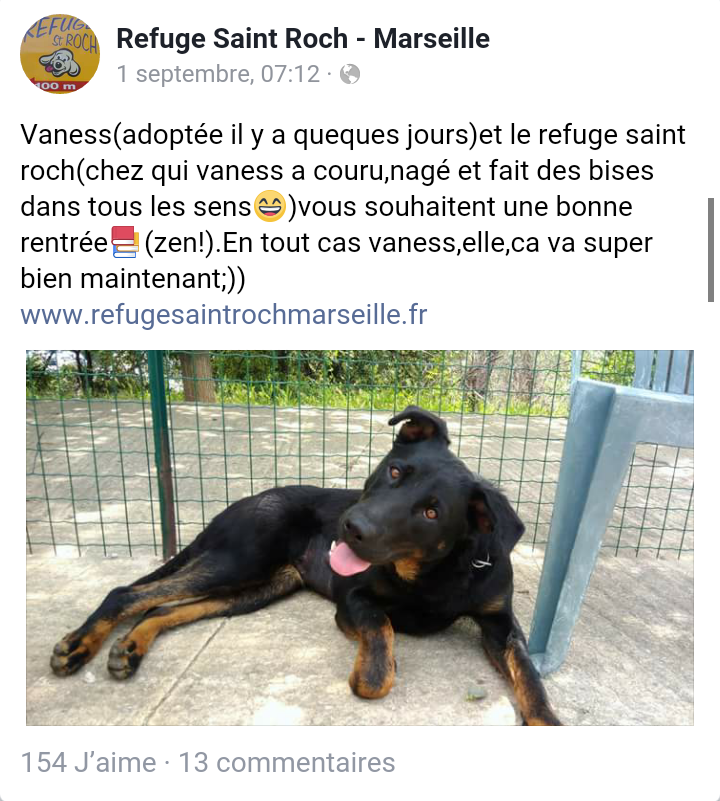 Vaness jolie beauceronne née en 2017 Scree121