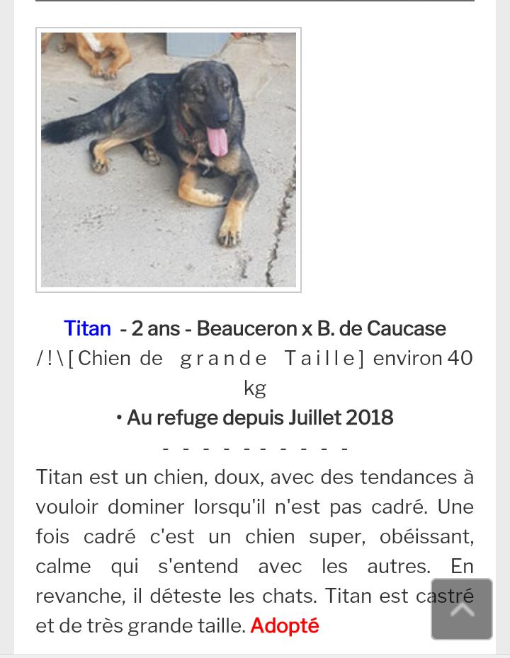 Titan croisé  beauceron berger du caucase mâle né en 2016 Scree122