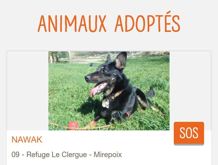 NAWAK, croisé beauceron né en 2014 Scree207
