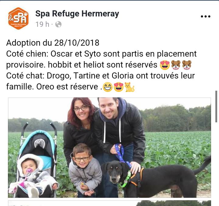 OSCAR croisé  beauceron mâle né en 2016 de retour à l adoption.. Scree231