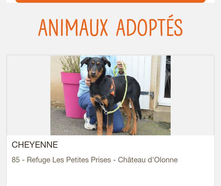Cheyenne femelle croisée beauceronne née en 2017 Scree269