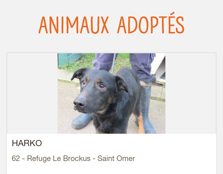 Harko mâle beauceron né en 2016 Scree293