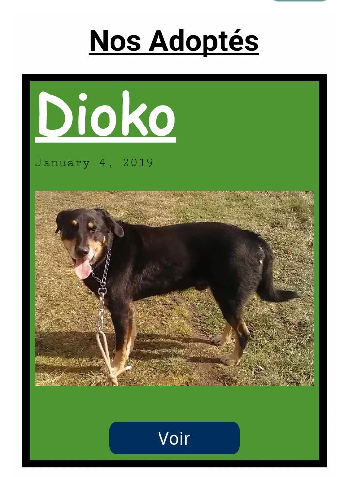 Dioko croisé  beauceron né en 2009 Scree321
