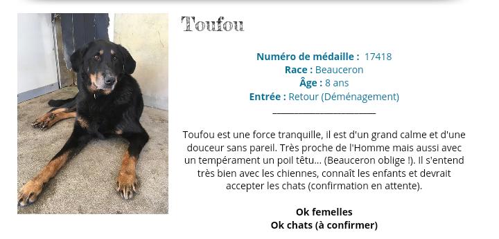 Toufou beauceron né en 2013 . Une perle. Scree394