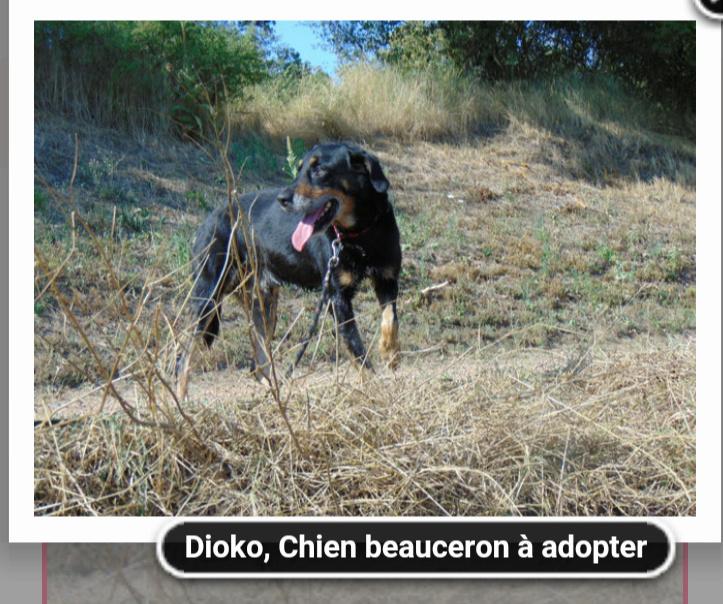 Dioko croisé  beauceron né en 2009 Screen29