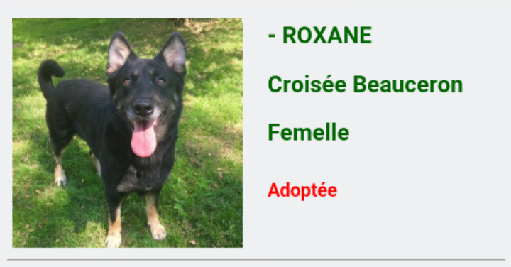 ROANNE jolie beauceronne née en 2014 Screen56