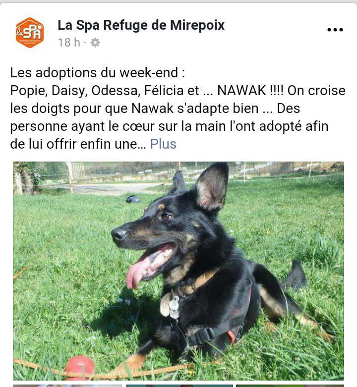 NAWAK, croisé beauceron né en 2014 Screen70