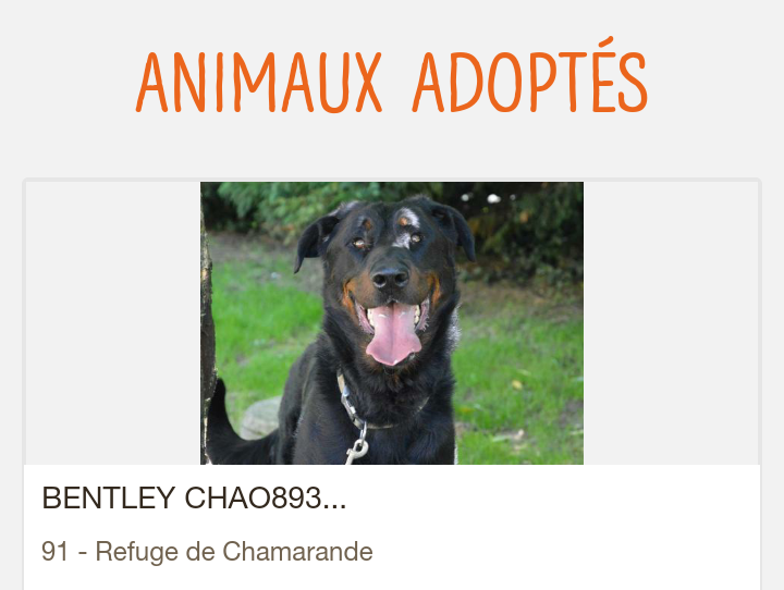 BENTLEY mâle beauceron né en 2015 Screen86