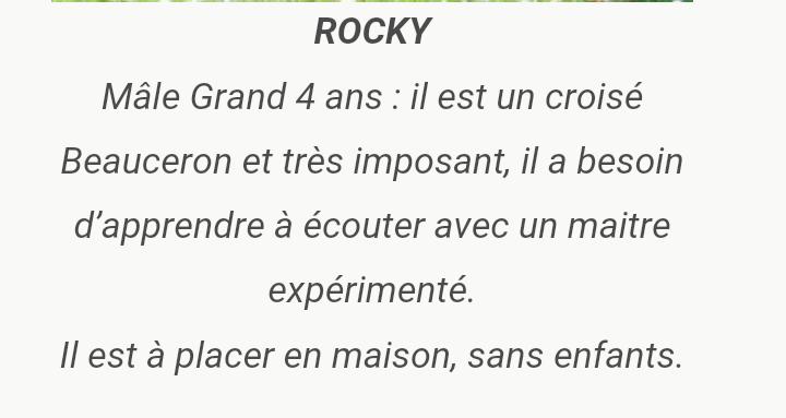 Boy, beauceron mâle né en 2013 et Rocky mâle croisé né en 2014 Screen99