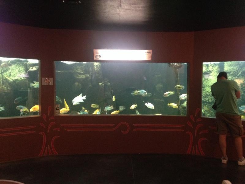 Visite Aquarium des Tropiques Allex dans la Drome A10